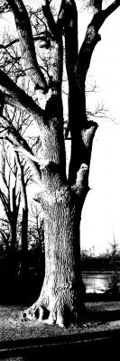 Pengaträd?