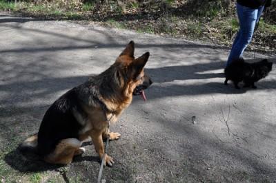 Eragon och Yatzy
