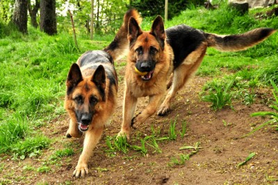 Debbie och Bagheera
