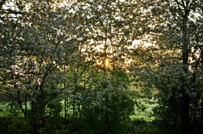 Soluppgång på landet...