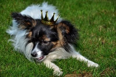 Pepzi goes princess