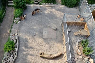 Hundgårdar