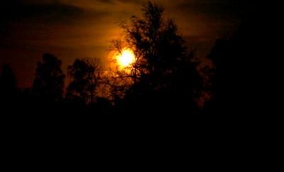 Ledda av månens sken