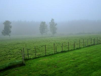 Mystisk dimma