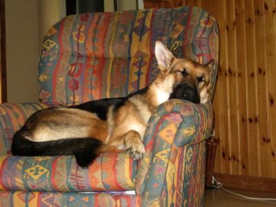 Diva - the dog
