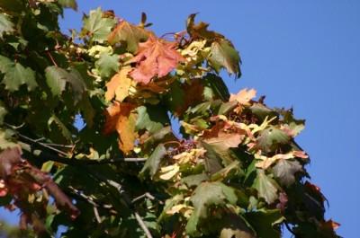 Hösten närmar sig...