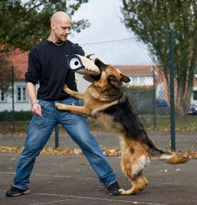 || mannen som kan prata om hundar ||