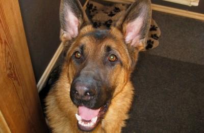 Eragon - hunden med ett leende på läpparna