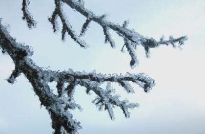 I vinterns grepp