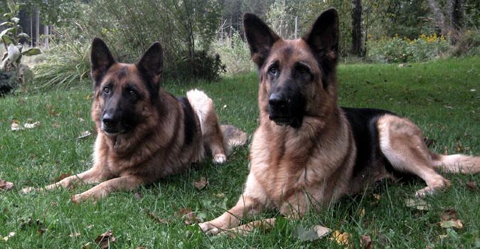 Debbie och Bagheera (sept -12)