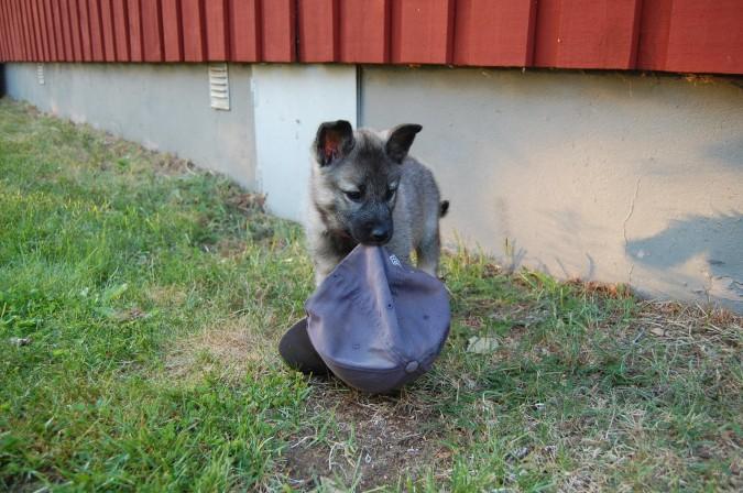 Bidrag 8 - Vem är sötast i Hundgården