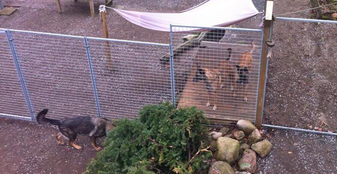 Hundvakt - Hundpensionat - Hunddagis - Hundgård