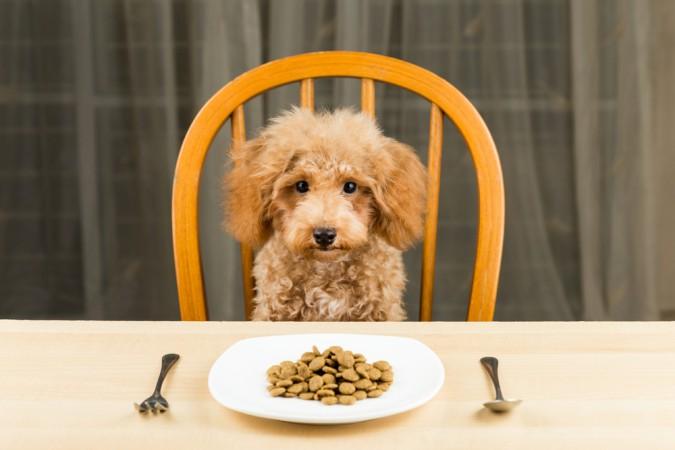 träna-hund-äta