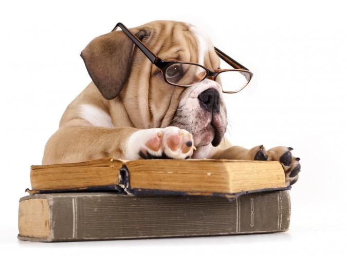 träna-hund-mentalt